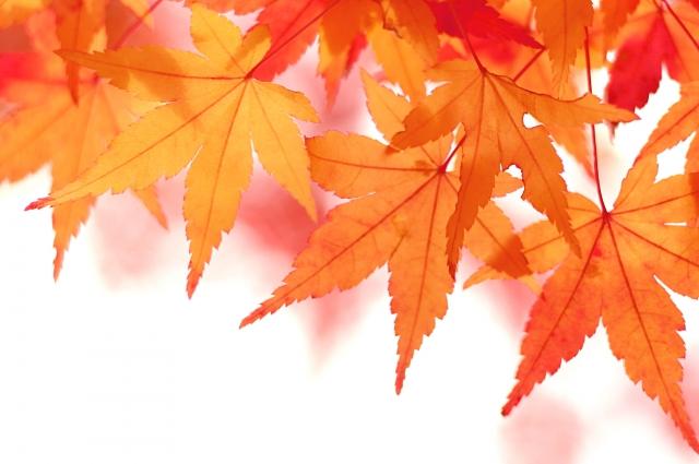 秋の不調は肺の弱り!?東洋医学的な対処法とは?
